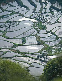 terraced rice-fields in Niigata, Japan