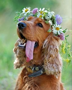Flower power dog with floral crown.