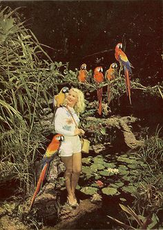 Good morning fromParrot Jungle, 1950's