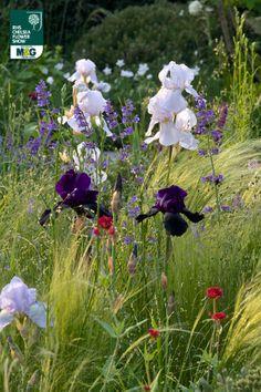 RHS Chelsea Flower Show - Show Garden - The Extending Space Auderset Fischer Design Nicole Fischer and Daniel Auderset