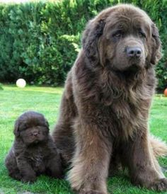 I can't handle how precious that little puppy is! 5 Dog Breeds For kids, click the pic to see all
