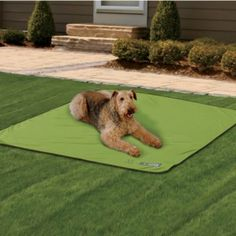 For the girls - Insect Shield® Dog Blanket