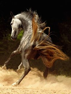 Amazing Photographs of Horses   20+ pictures   Most Beautiful Pages