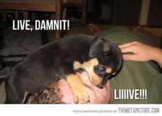 Paramedic puppy