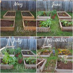 Miller Musings: 11 Things We Learned Our First Year Gardening