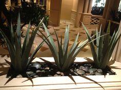 Nice way to pot succulents