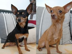 Adoptable Pets of the Week