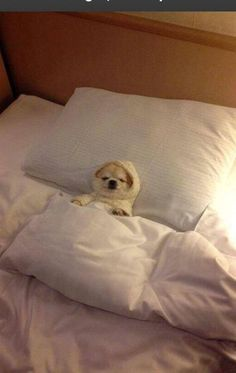 dog tucked into bed