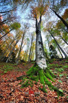~~Seven Lakes Autumn ~ Bolu, Turkey by Ilker Kırmızi~~