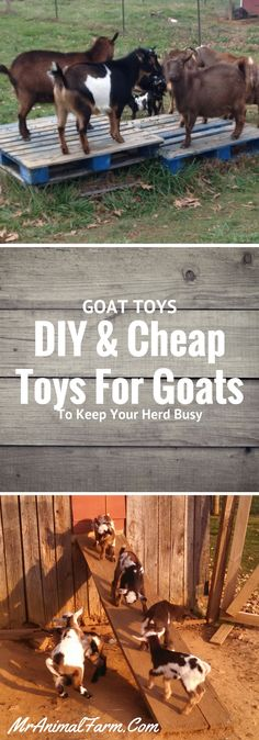 Goat toys!  DIY and