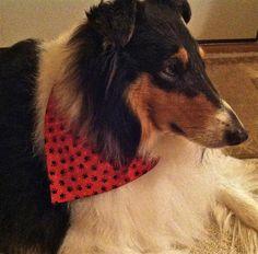 How to make a bandana. Reversible Over The Collar Dog Bandana - Step 20