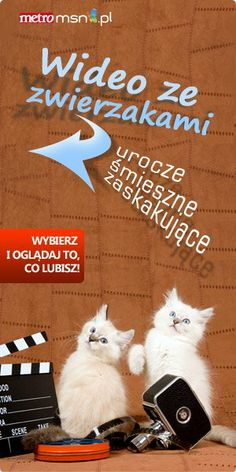 #fun #videos #animals #lol #cats #dogs #laugh