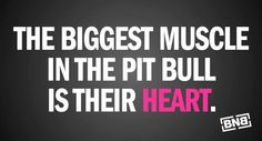 That is the only locking muscle in a pit bull.  They lock onto your heart and never let go.  Oh this is so true!!!