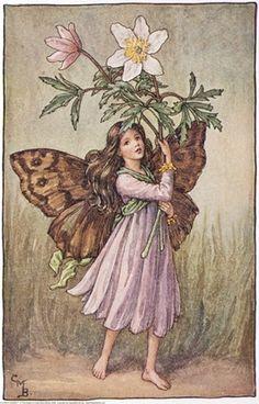 windflow fairi, flower fairies, flower faries