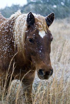 Assateague wild ponies, Assateague Island National Seashore, Maryland~ love these wild ponies