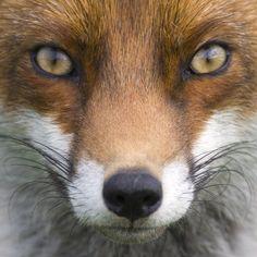 Beautiful fox!