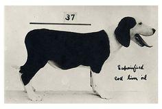 print onekingslanecom, measur frame, dogs, art, dog measur, black, king lane, framed prints, frame print