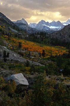 Aspendall--eastern Sierras