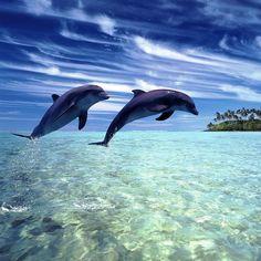 anim, dolphins, creatur, natur, sea, ocean, beauti, beach, thing