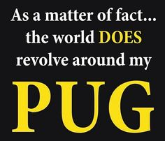 The world does revolve around my pug.