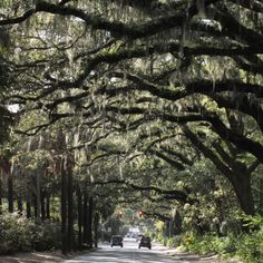 Savannah's tree lined Victory Drive is a must when you visit!