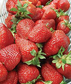 Strawberries: Albion, an everbearing type, is a new variety from California with long, conical, symmetrical; firm fruit bursting with sweetness. Resists Verticillium wilt, Phytophthora crown rot and resistance to anthracnose crown rot.
