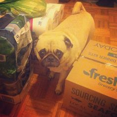 Pilgrim is One with his FreshDirect Delivery Boxes