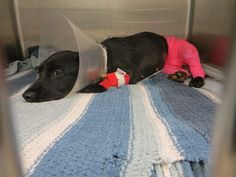please sign petition. Grace was burned and kicked repeatedly in the head by children. The parents are legally responsible. Pls sign so that they are held accountable. the pics are graphic at the petition site as the puppy was held over an open flame. thank you.