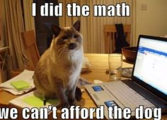 crazy cats, siamese cats, funny cats, bye bye, dog funnies, crazy cat lady, berries, math skills, cat memes