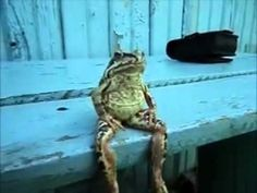 Awesome frog