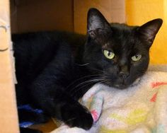 A Tonk's Tail... err, Tale...: Wed Waifs & Shelter Sweeties: #BlogtheChange