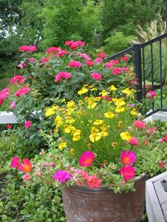 "Easy Container Plantings Ideas ~ Using ""Thrillers"",  ""Fillers"", & ""Spillers"""
