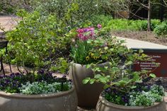 Lush container gardens near The Morton Arboretum's Visitor Center