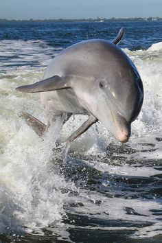 Happy dolphin.