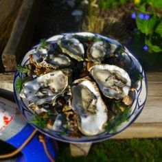 Kentish Native Oysters