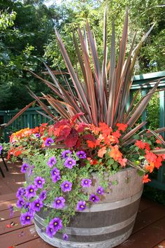 Tall spiky flax grass, bright orange coleus and purple trailing petunias make a colorful fall container garden