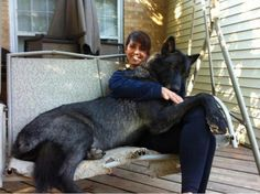 I just want a pet wolf!!