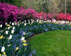 Backyard on pinterest fence arbors and climbing roses for Herbaceous border design examples