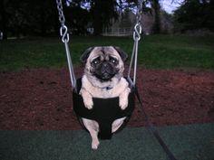 Pug needs a push