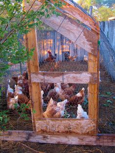 Cricket Song Farm: Chicken Run made from Cattle Panels