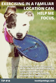 Exercising in a familiar location can help your dog focus. www.koolcollar4dogs.com