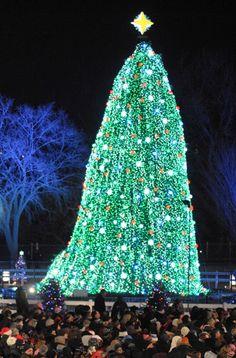 The National Tree lighting ceremony