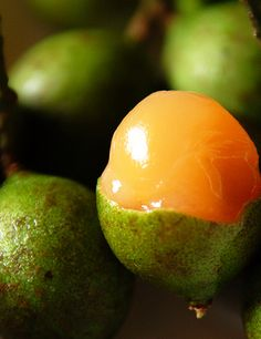 Traditional Puerto Rican Bili Drink Recipe - Quenepa Fruit.. ohmygosh!! i had them and they were so so good!!