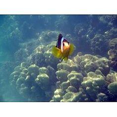 Get to Know Nemo at Galaxy Tacoma Narrows 8 Tacoma, WA #Kids #Events