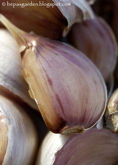 Bepa's Garden: Planting Garlic
