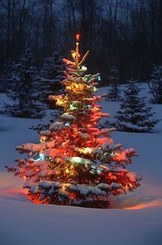 Christmas Tree With Lights Outdoors In