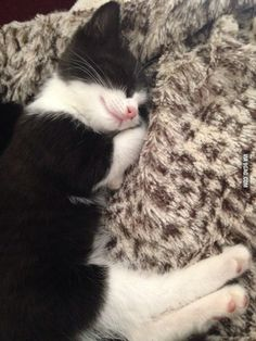 Kitten sleeps with h