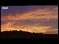 World's largest bat colony - over 40 million bats - BBC wildlife