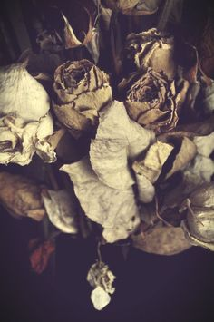 dried dead roses