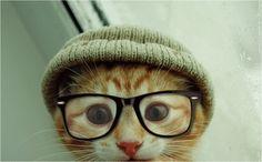 geek, hats, kitty cats, hipsters, font, glass, kittens, friend, animal